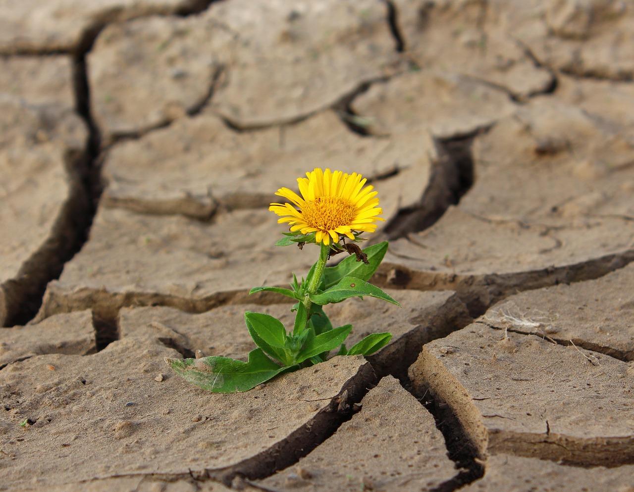 La agricultura, el turismo y la energía compiten por el agua